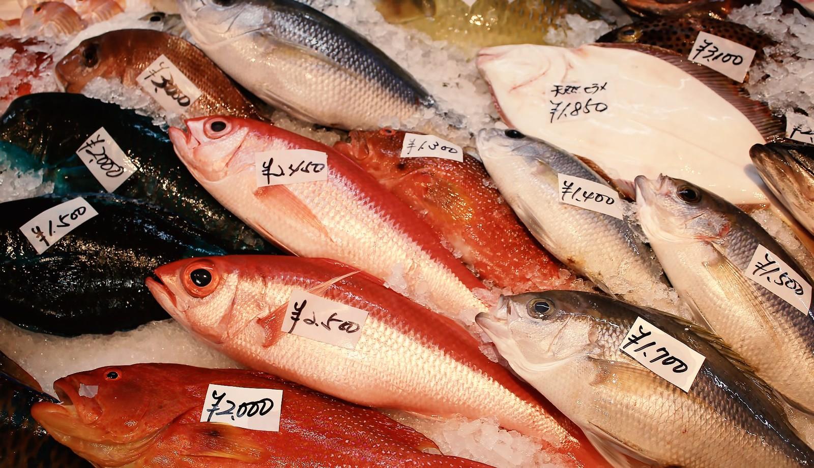 高齢者向け脳トレ!魚の漢字読みクイズ20問 あなたは何問解ける?