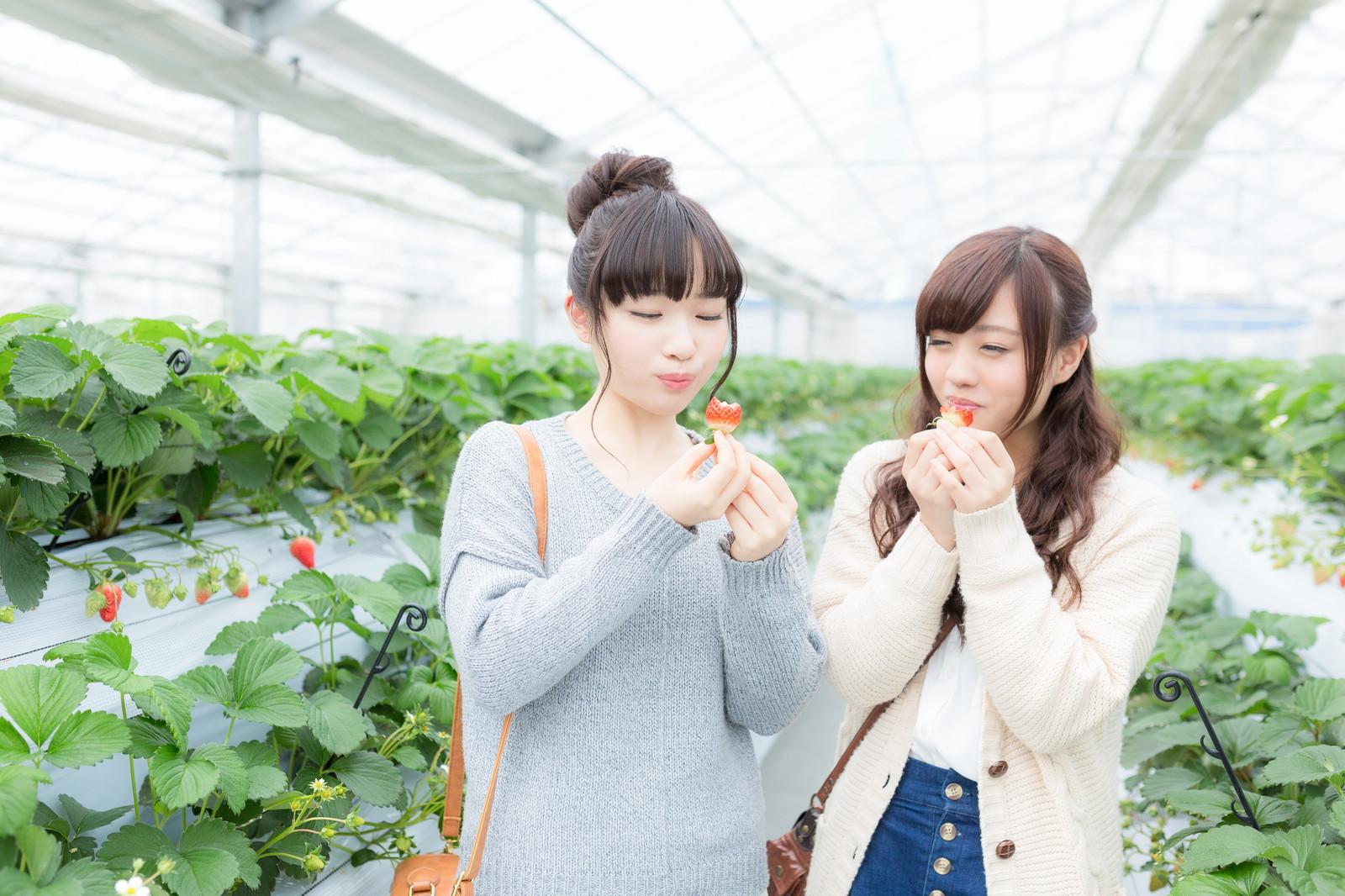 【高齢者向けクイズ】『果物』の漢字読み問題で脳トレ!ボケ・認知症予防